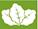 Caja blanca Champak mediana, laminada